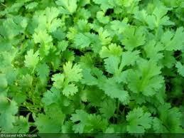 les herbes aromatiques en cuisine les plantes aromatiques dans la cuisine arom antique
