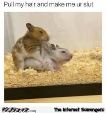Memes For Sex - pull my hair funny gerbil sex meme pmslweb