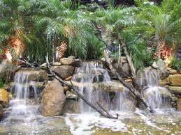 photos ecosystem ponds orlando florida water garden experts