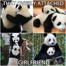 friday meme panda meme best of the funny meme