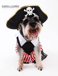 Dog Costumes Halloween 60 Funny Dog Costumes Images Animals Pet