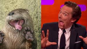 Benedict Cumberbatch Meme - watch benedict cumberbatch go full otter as a bewildered johnny