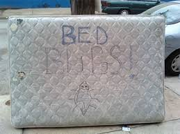 Bed Bugs New York City Bedbug Registry Creator Talks Infestations Prevention And The