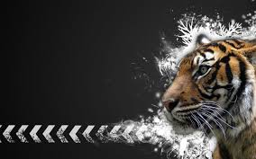 Best Wallpaper Site by Tiger Hd Wallpaper 1 Animals Planent Tiger Pinterest Hd