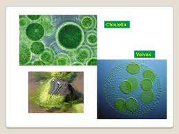 plants and human welfare ppt video online download