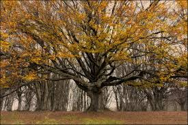 nature pic of the day 20141118 autumn in canfaito