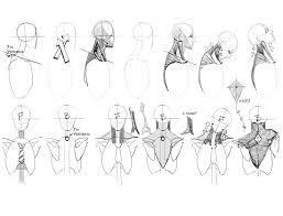 Human Anatomy Reference 329 Best Anatomy Reference Images On Pinterest Anatomy Reference