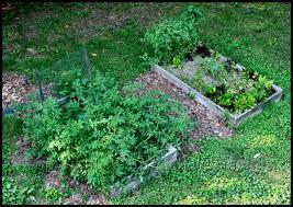 Intensive Gardening Layout by Backyard Gardening Styles Serendipity Life Garden Garden2