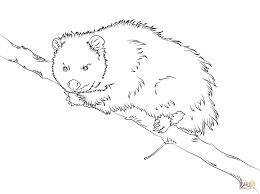 virginia opossum sits on a tree coloring page free printable