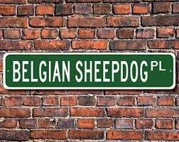 belgian sheepdog available belgian sheepdog etsy