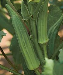 Okra Plant Diseases - clemson spineless okra seeds and plants vegetable gardening at