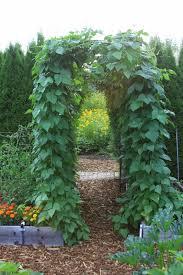 Trellis Poles Trellis Design Growing Pole Beans Trellis Bean Trellis Pole Bean