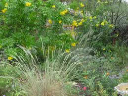 native texas plants ground cover my gardener says u2026