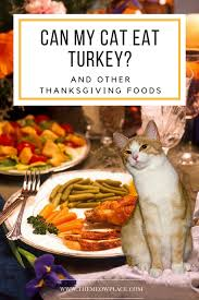 what thanksgiving foods are safe for my cat to eat