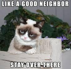 Mad Cat Memes - grumpy cat meme grumpy cat pictures and angry cat meme