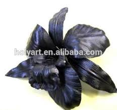 black orchid flower black orchid flowers for sale black orchid flowers for sale