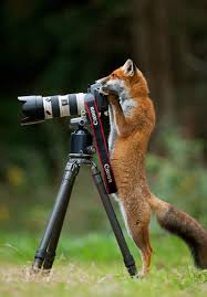 21 animals that want to be photographers bored panda