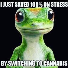 Funny Stress Memes - geico gekko spoof switched to cannabis weed memes