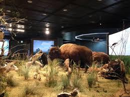 Texas wildlife images Farish hall of texas wildlife houston museum of natural science jpg