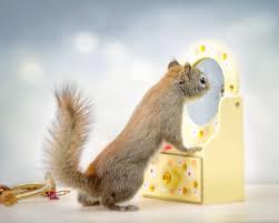 secret life of squirrels mr peanuts and friends