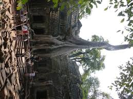 cool trees 41 photos of angkor wat and other angkorian temples the aloof