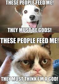 Dog Cat Meme - the difference between cats and dogs by detergent meme center