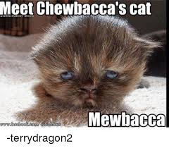 Star Wars Cat Meme - meet chewbacca s cat mgewbacca terrydragon2 cats meme on me me