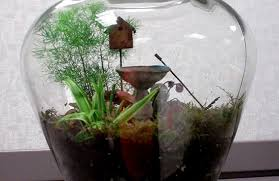 download garden terrariums solidaria garden