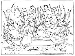 coloring book pages birds kids drawing and coloring pages marisa