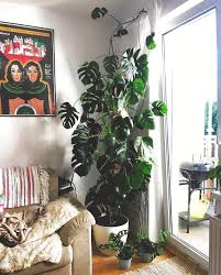 10 4k likes 137 comments house plant club houseplantclub on