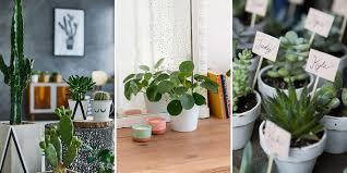 plantes dans la chambre quelles plantes choisir pour mon intérieur et comment en prendre