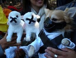 Halloween Costume Dog Hannibal Lecter Dog Halloween Costume Halloween