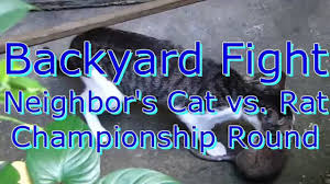 Youtube Backyard Fights Fight Cat Vs Huge Rat Youtube Video Dailymotion