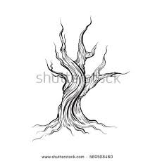 old tree isolated stock images royalty free images u0026 vectors