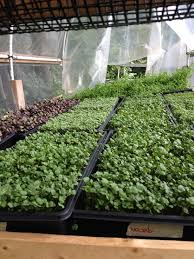 spin farming in new england a new approach for market gardening