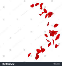 red rose petals scattered on floor stock photo 510878704