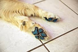 amazon com pawfriction paw pad traction increase your dog u0027s