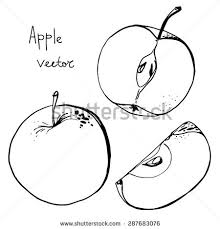 apple drawing stock images royalty free images u0026 vectors