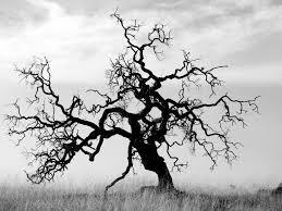 dead white oak search logoinspiration white oak