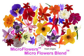 edible flowers edible flowers firestix sparklers microflower blend freshorigins