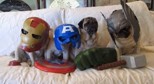 pugs dressed up as u0027the avengers u0027 may just be the cutest thing you