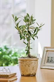 best 25 dwarf fruit trees ideas on pinterest growing vegetables