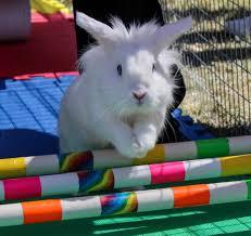 Balboa Park Halloween Activities by Bunnyfest Sunday September 24 2017 10 A M To 4 P M San