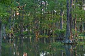 Louisiana Lakes images Louisiana lake search in pictures jpg