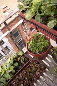 container gardening 101 homegrown