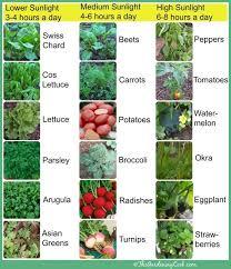 High Heat Plants 4 Ways To Help Your Plants Survive A Heatwave Survivopedia
