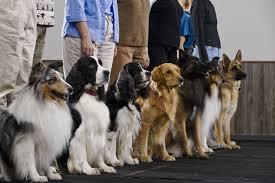 animal careers internships and advice
