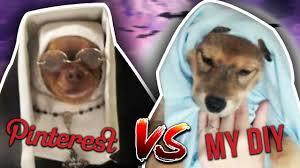 trying pinterest diy dog halloween costumes omg long title youtube