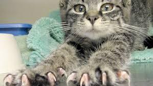 gatti divani perch礬 i gatti graffiano mobili e divani gatti pets greenstyle