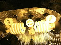 Flower Light Bulbs - how to grow weed with cfls grow weed easy